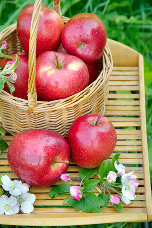 Photo for Wicker basket in the garden. Picnic on the grass. Ripe apples and apple blossoms. close up - Royalty Free Image