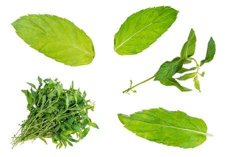 Photo pour set of fresh mint herbs cut out on white background - image libre de droit