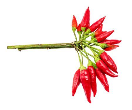 Foto für Bunch of fresh red little chili pepper cut out on white cackground - Lizenzfreies Bild