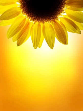 Photo pour A sunflower on sunset sky - image libre de droit