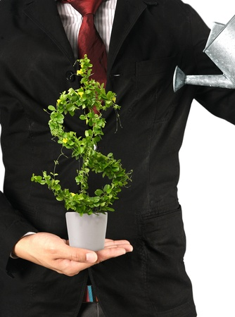 Businessman and  tree with US dollar isolated