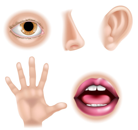 Five senses illustrations with hand for touch, eye for sight, nose for smell, ear for hearing and mouth for taste