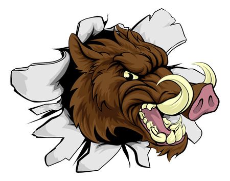 Illustration for A wild boar or razorback cartoon sports mascot breaking through a wall - Royalty Free Image