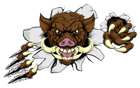 Illustration for A wild boar or razorback cartoon sports mascot ripping through a wall with his claws - Royalty Free Image