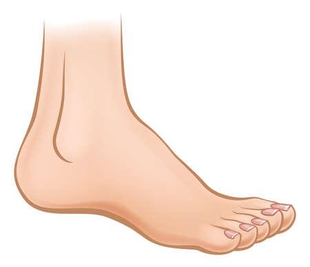 Ilustración de An illustration of a cartoon human foot - Imagen libre de derechos