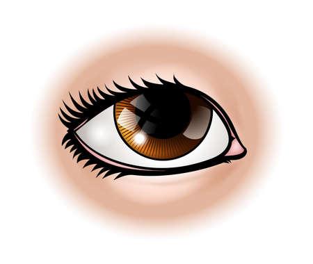 An illustration of a human eye body part