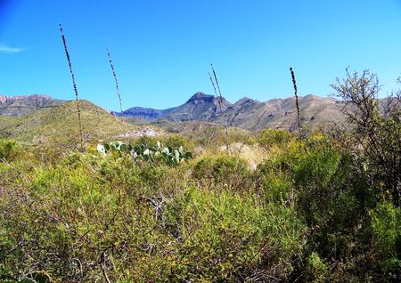 desert mountains with sotol, cactus & mesquite in foreground
