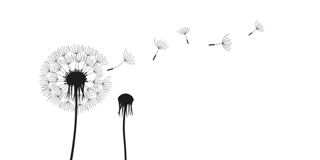 Illustration pour dandelion silhouette with flying seeds isolated on white background vector illustration EPS10 - image libre de droit