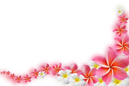 Photo for Beautiful Frangipani flowers  - border design - Royalty Free Image