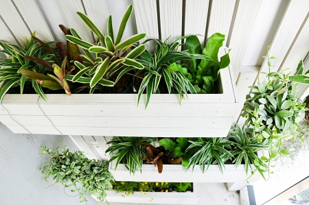 Top view of small vertical garden