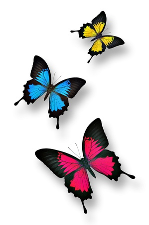 Colorful butterflies isolatd on white
