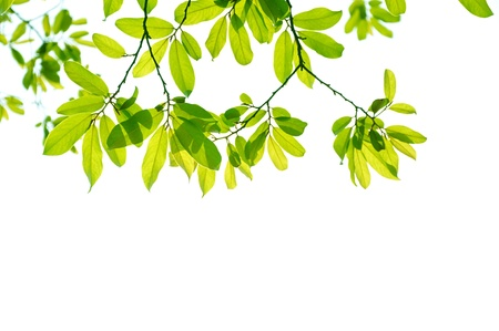 Yellow and green Leaf background