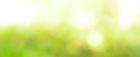 Photo pour Abstract light green bokeh panoramic header background - image libre de droit
