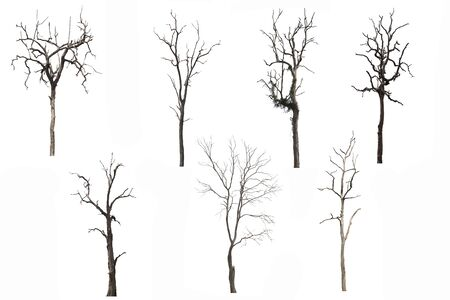 Photo pour Set of Dead tree or dried tree isolated on white background.Clipping path. - image libre de droit