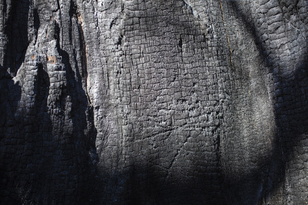 The texture of the burned tree close-up. Contrast light on a sunny day