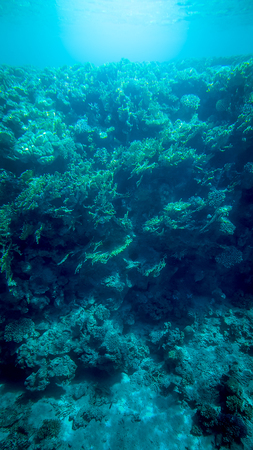 Photo pour Panoramic underwater image of beautiful coral reef and swimming tropical fishes - image libre de droit