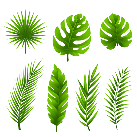 Illustration pour Jungle leaves set. Tropical palm tree leaves collection. - image libre de droit
