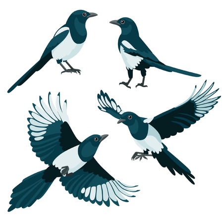 There are two sitting magpies and two flying magpies in cartoon style