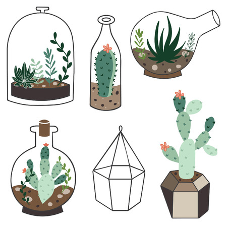 Vector set with succulents flowers and glass terrariums. Vector illustration.
