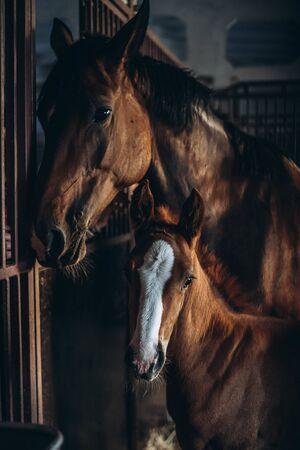 Photo pour Cute foal with his mother - image libre de droit