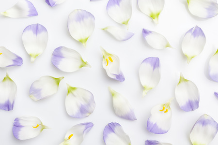 Floral background white and purple flower petals on white background from above