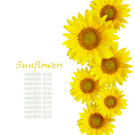 Foto de Sunflowes arrangement isolated on white - Imagen libre de derechos