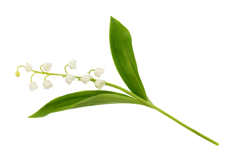 Photo pour Closeup of lily of the valley flower isolated on white - image libre de droit