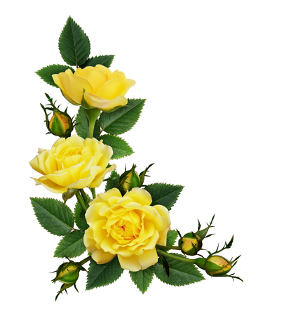 Foto per Yellow rose flowers in a corner arrangement isolated on white background. Flat lay, top view. - Immagine Royalty Free