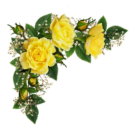 Photo pour Yellow rose flowers in a corner arrangement isolated on white background. Flat lay, top view. - image libre de droit