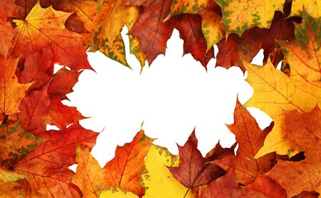 Photo pour Frame with autumn colorful leaves isolated on white background. Top view. Flat lay. - image libre de droit