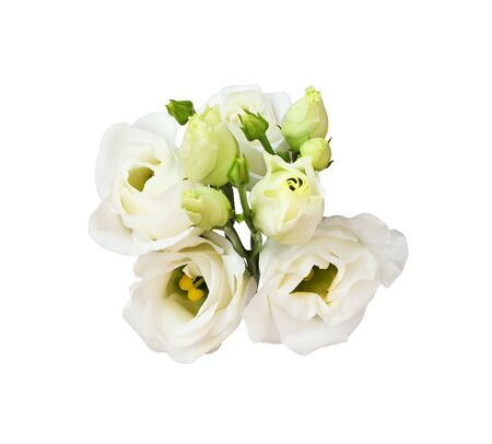 Photo for Twig of eustoma flowers and buds isolated on white - Royalty Free Image