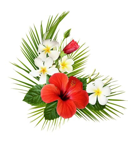 Photo pour Red hibiscus and fragipani flowers with green tropical leaves in a corner exotic arrangement isolated on white background - image libre de droit