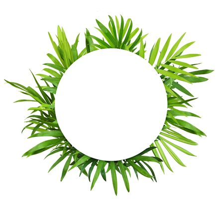 Photo pour Green leaves of chameadorea palm with whita round card for text isolated on white background - image libre de droit