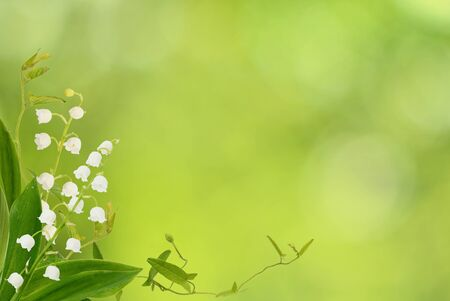 Photo pour Lily of the valley flowers and bindweed sprigs in a corner arrangement on green bokeh background - image libre de droit