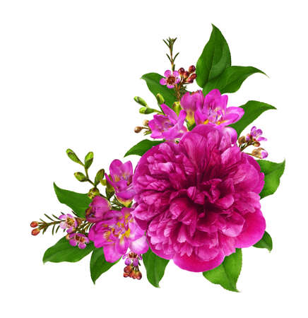 Photo for Pink peony and freesia flowers with green leaves in a corner arrangement isolated on white background - Royalty Free Image