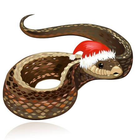 Beautiful snake in santa hat
