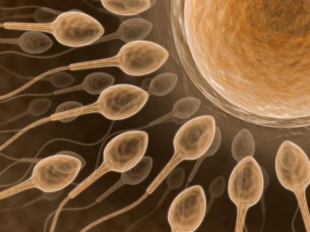 (Sperm Close up) Fecundation of the spermatozoid with an ovum
