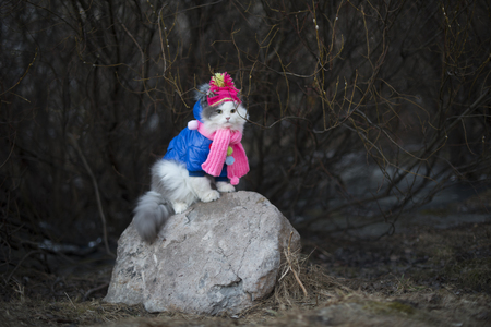 Cat in warm clothes waiting for spring