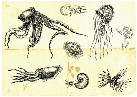 Illustration pour Hand-drawn collection  Marine life - SEA MONSTERS   - image libre de droit