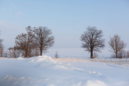 Photo for Winter landscape. Field covered with snow and bald trees - Royalty Free Image