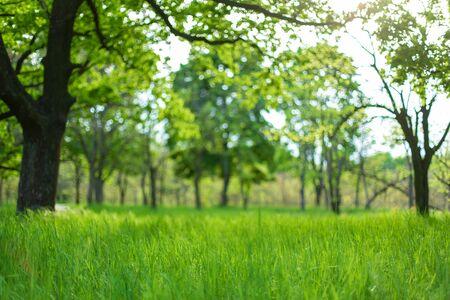 Foto de Fresh green grass among trees in spring forest. - Imagen libre de derechos