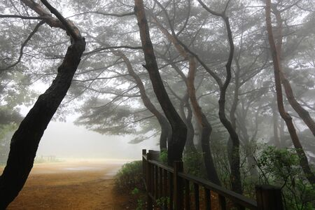 Photo for Road through a forest with fog - Royalty Free Image