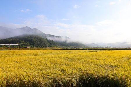 Photo pour View of golden rice fields in the autumn mountain village, South Korea - image libre de droit