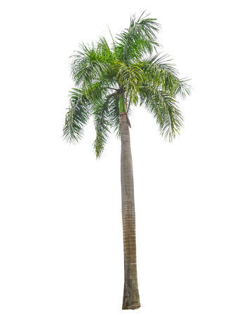 Trees on white background. (Used for background image , Or design work)