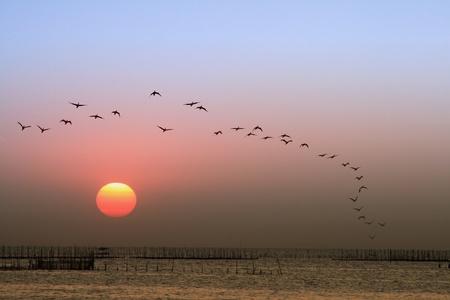Sunset, birds flying back to nest