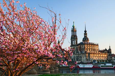 spring in Dresden