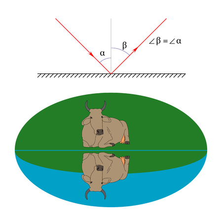 Illustration of the law of reflection of light and an example of a cow specular reflection from the water surface