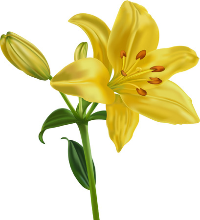 Ilustración de The yellow lily on a white background is executed with  mesh tool  - Imagen libre de derechos