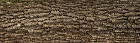 Foto de Relief texture of the brown bark of a tree with green moss on it. Horizontal photo of a tree bark texture. Relief creative texture of an old oak bark. - Imagen libre de derechos