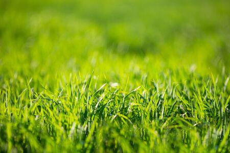 Photo pour Green grass on a summer day. - image libre de droit
